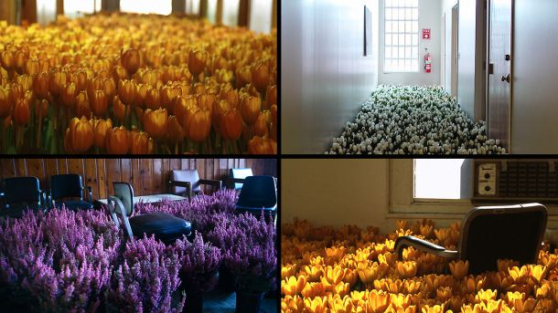 a four-grid shot of various rooms and hallways, spilling over with flowers.