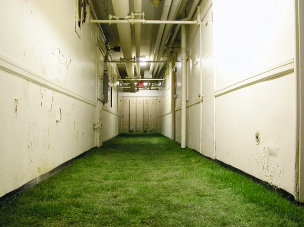 an institutional basement, with peeling paint, whose floor is covered with soft green grass