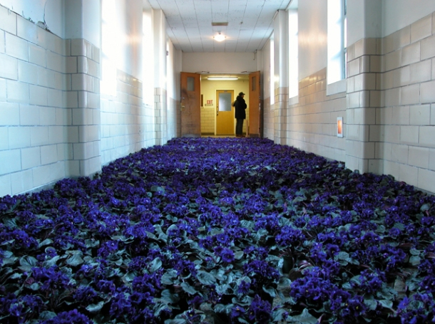 a cinder block institutional hallway, with floors carpeted in purple African violets