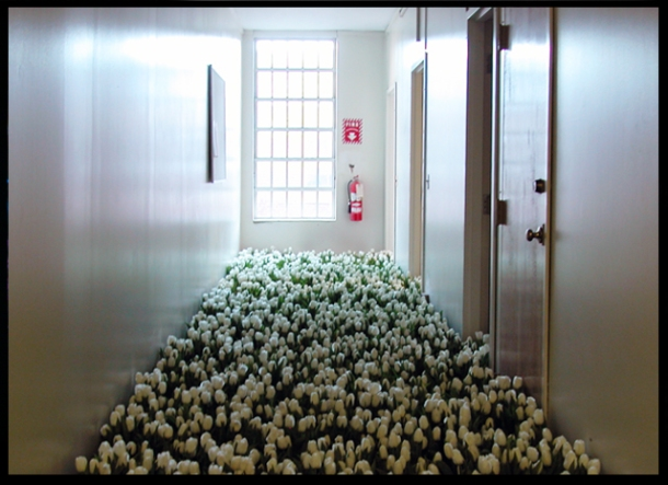 a hallway, lit by a big window at the end, floor full of white tulips
